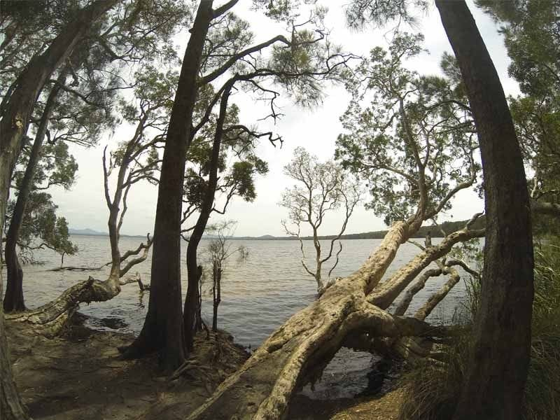 Dees Corner, Myall Lake Nat Park, North of Hawks Nest