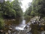 Frying Pan Creek, Chinchester State Forest, Gloucester Region