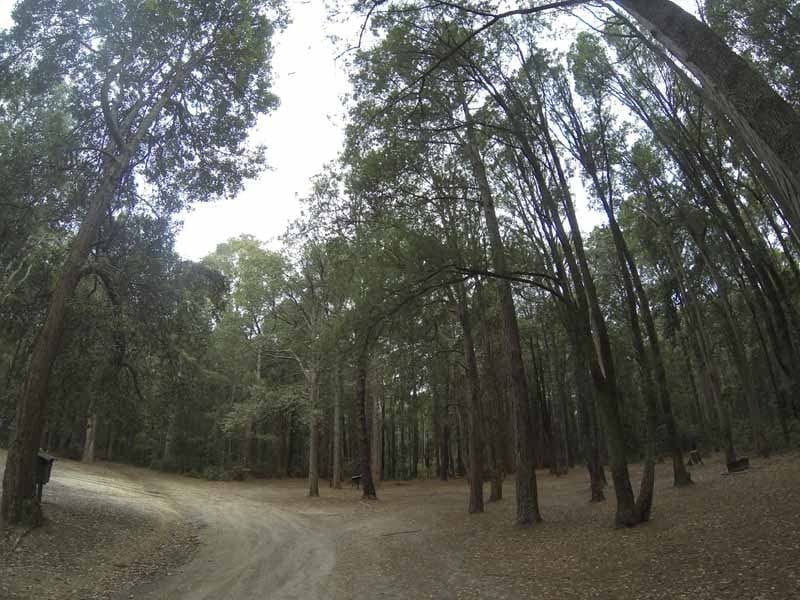 Casurina, Onley State Forest, South West of Newcastle
