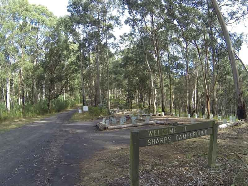 Sharps Track, Great Otway NP, West of Lorne