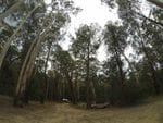 Stockmens Reward Camp Area, Big River State Forest
