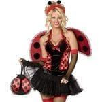 Insect  (Ladybug)