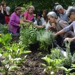 Seniors Festival-Gardening Workshop and Cooking Demo