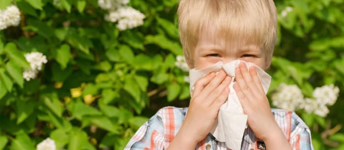 Your allergies might just be caused by a pest infestation