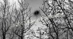 Trees in Black and White - Karen Foenander