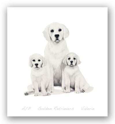 Golden Retrievers - Valerie