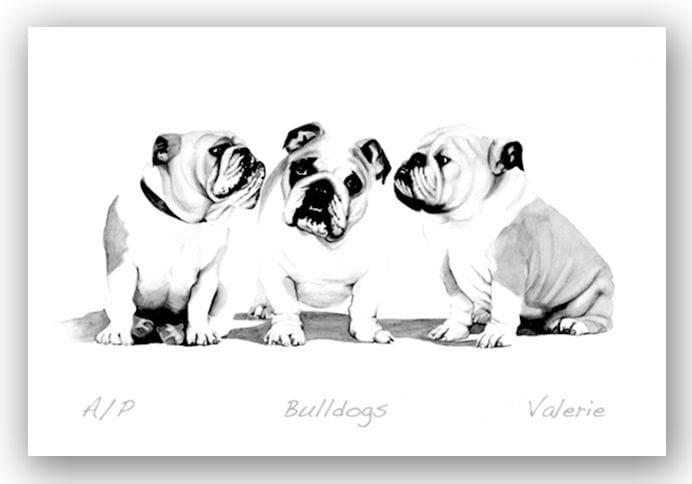 Bulldogs - Valerie