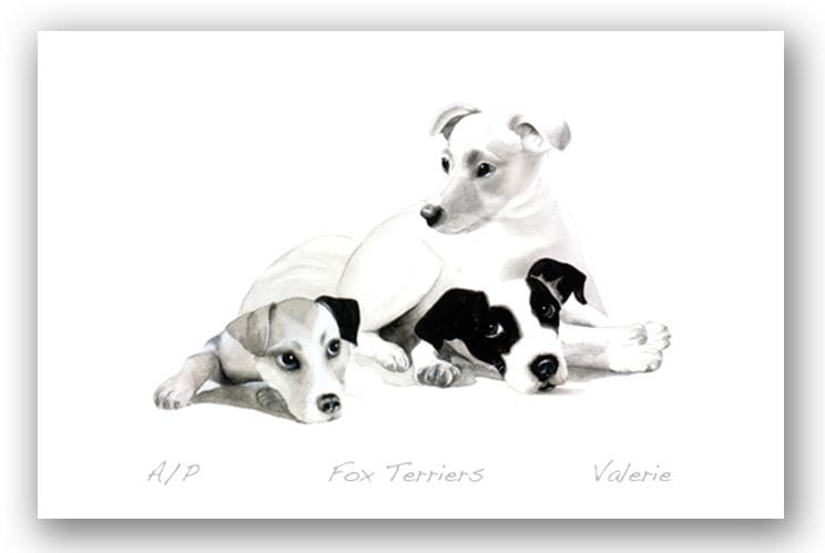 Fox Terriers - Valerie