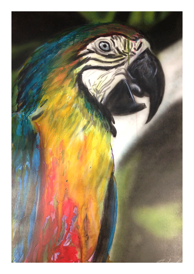 Macaw by Sheehan