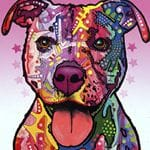 Staffordshire Terrier 115409
