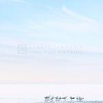 Seagulls Beaumaris - Liza Clements