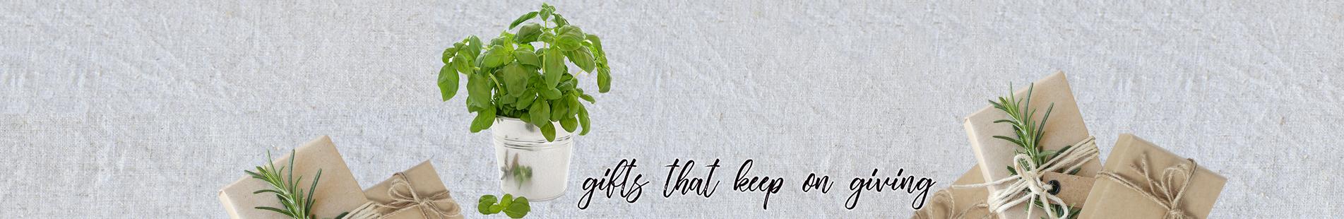 Grow herbs on your windowsill
