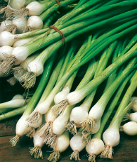 Spring onions are a quick and easy way to add onion flavour to salads and cooked dishes.