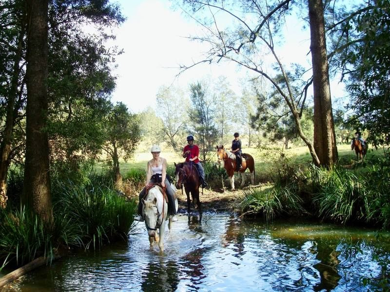 Giddy Up with Bellrowan Valley Horseriding