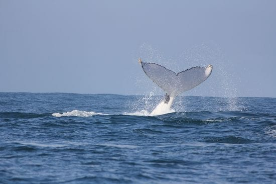 Whale Watching on Essence - a first hand experience on the new boat