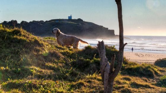 Lighthouse Beach Port Macquarie - Dog friendly