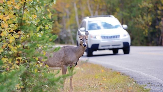 Watch Out for Wildlife: 4 Animal-Friendly Driving Tips