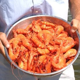 COAST PRAWNS BOUND FOR AMERICAN MENUS