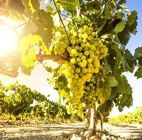 CASELLA SNARES HOWCROFT VINEYARD FOR $9M