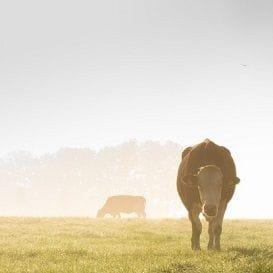 LAW AMENDMENTS TO HELP STRUGGLING FARMERS