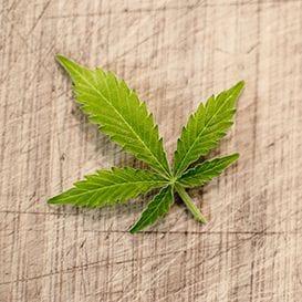 QBL reveals major cannabis product distribution scheme