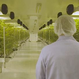 Cannabis producers MMJ make seven figure investment in online access portal for medicinal cannabis