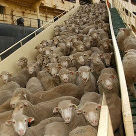 Liberal MPs to pursue a bill to phase out live export trade