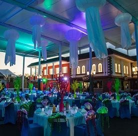 Sea World to host a magical Christmas party under the sea
