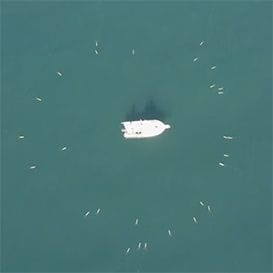 Sydney underwater drone maker joins US warfare consortium