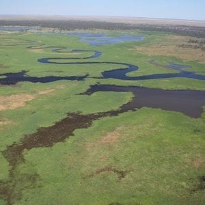 Huge Murray-Darling wetland saved by $55M sale to conservationists