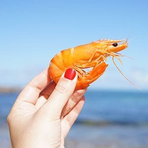 Queensland prawns given clean bill of health from white spot
