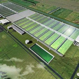 Cannatrek to build $160 million medicinal cannabis facility in Victoria