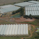 THC secures new production site in Bundaberg