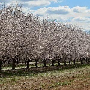 Rural Funds launches lawsuit against short seller Bonitas Research