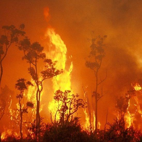 Kangaroo Island Plantation Timbers hit again by bushfires