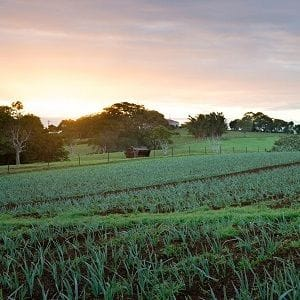 Tom and Emma Lane to sell The Farm in Byron Bay