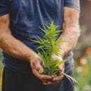 Creso Pharma welcomes TGA decision opening up commercial cannabis opportunities
