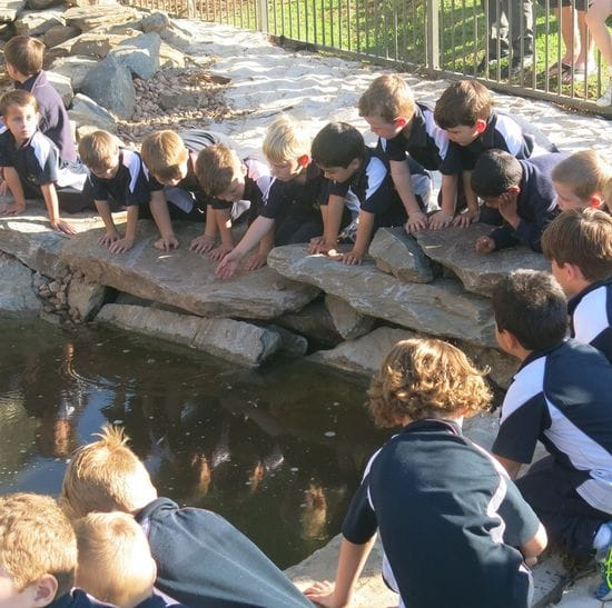 St Michael's College- a leader in Environmental Sustainability