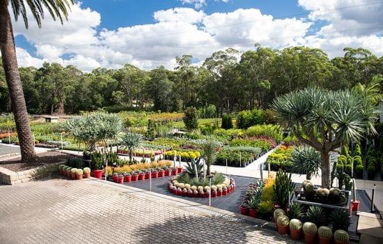 Exotic Nurseries Now an LNA Gold Partner!
