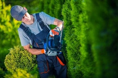 Landscaper cutting a hedge