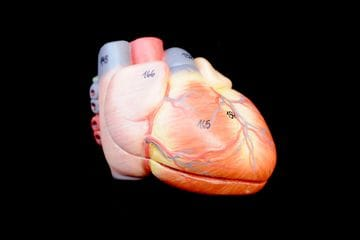 The Heart's Right Ventricle: The true Achilles' heel of the endurance athlete?