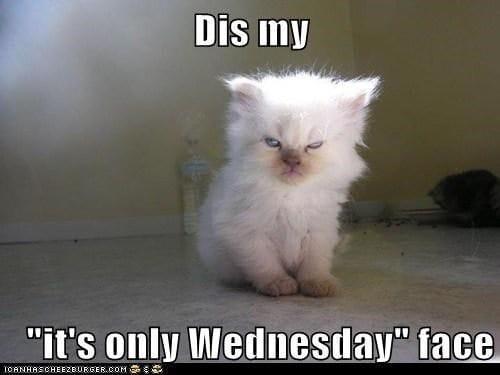 Kitty is Not Happy!