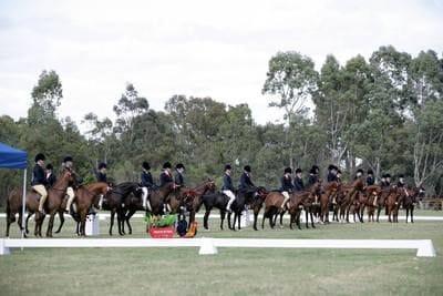 Show Horse Council of WA
