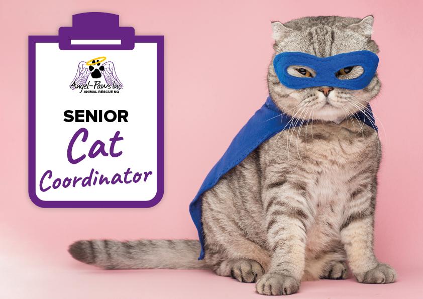 Senior Cat Coordinator