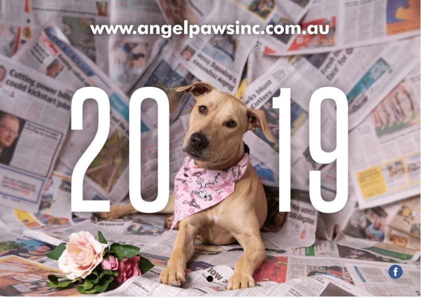 2019 Angel-Paws Inc. Calendars CARTON DEAL