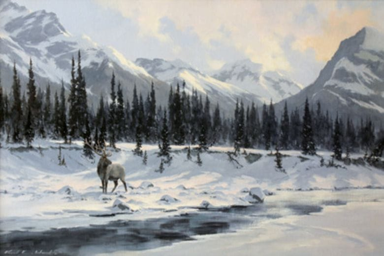 Kootenay Elk