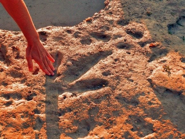 Dinosaur Tracks adding to the tourism potential of Broome