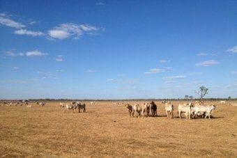 Chair of Pastoral Lands Board resigns over rangelands reforms in Western Australia