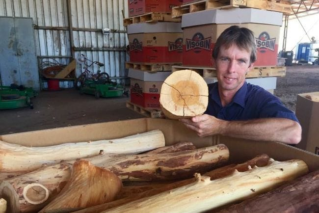 Decision to grow Indian sandalwood paying off for Ord Valley farmer