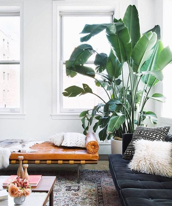 8 low-maintenance indoor plants to buy in 2019